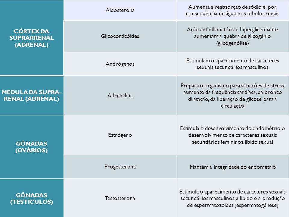 CÓRTEX DA SUPRARRENAL (ADRENAL) MEDULA DA SUPRA-RENAL (ADRENAL)