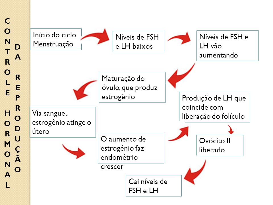 CONTROLE HORMONAL DA REPRODUÇÃO. Início do ciclo. Menstruação. Níveis de FSH e LH baixos. Níveis de FSH e LH vão aumentando.