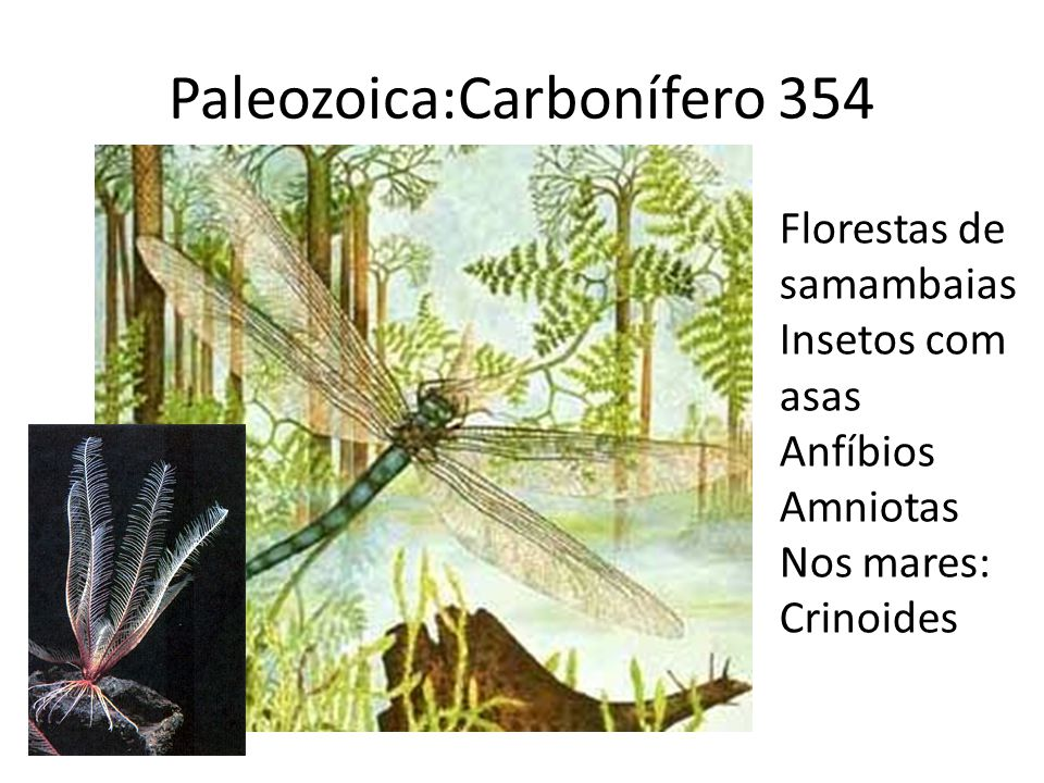 Paleozoica:Carbonífero 354