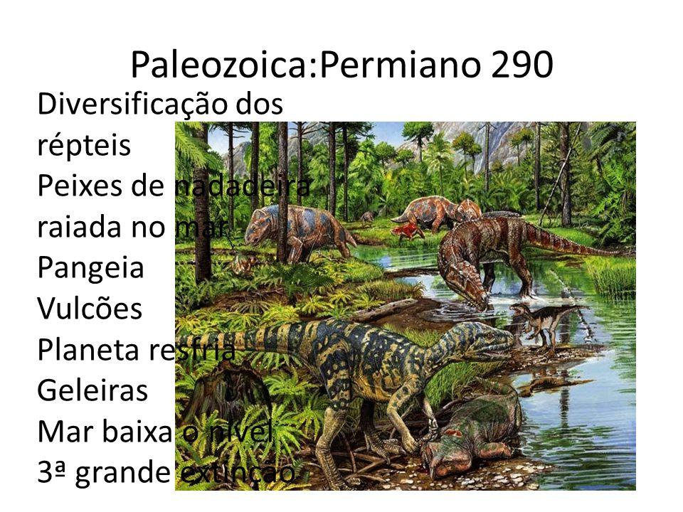 Paleozoica:Permiano 290 Diversificação dos répteis