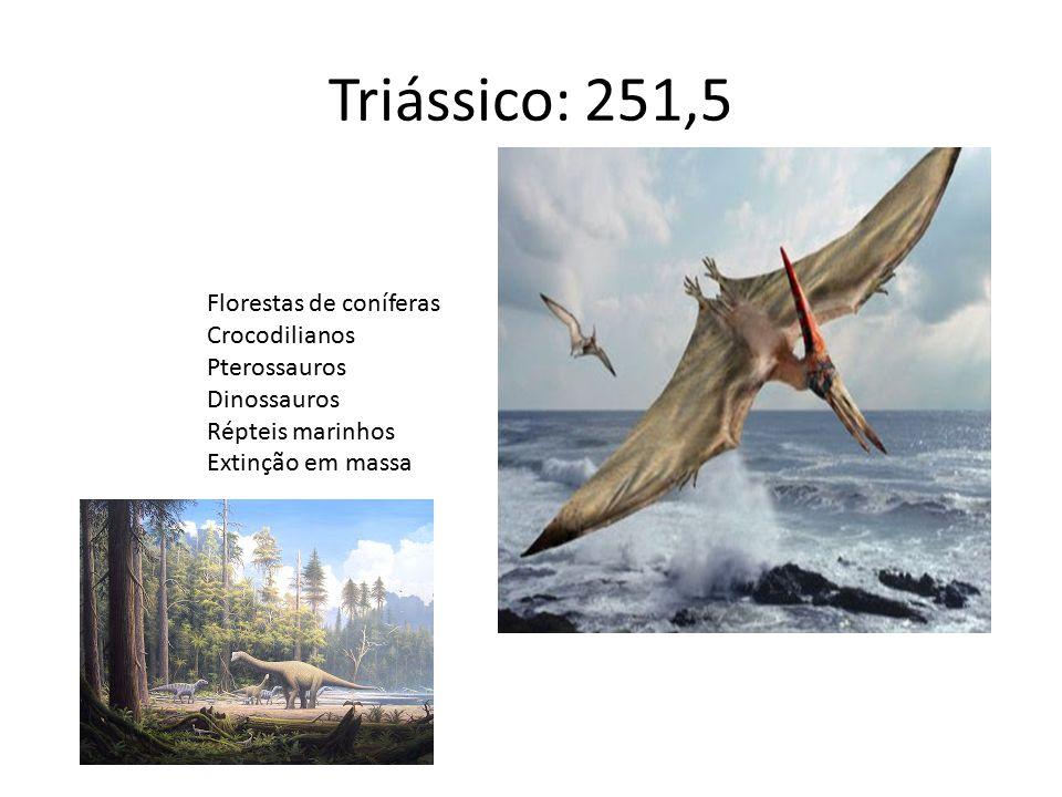 Triássico: 251,5 Florestas de coníferas Crocodilianos Pterossauros
