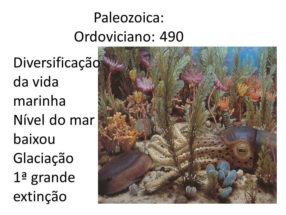 Paleozoica: Ordoviciano: 490
