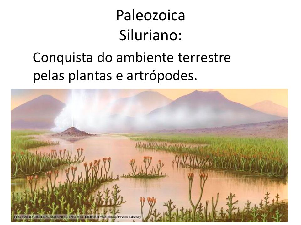 Paleozoica Siluriano: