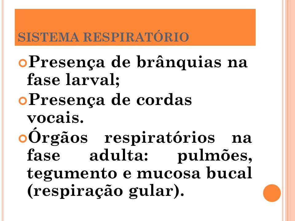 Presença de brânquias na fase larval; Presença de cordas vocais.