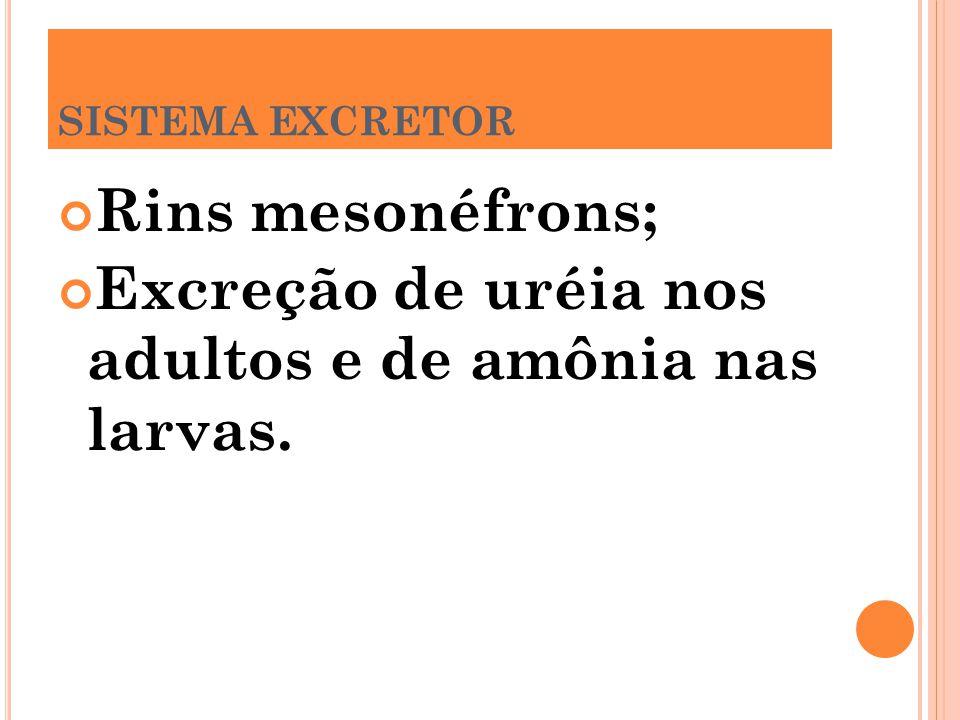 Excreção de uréia nos adultos e de amônia nas larvas.