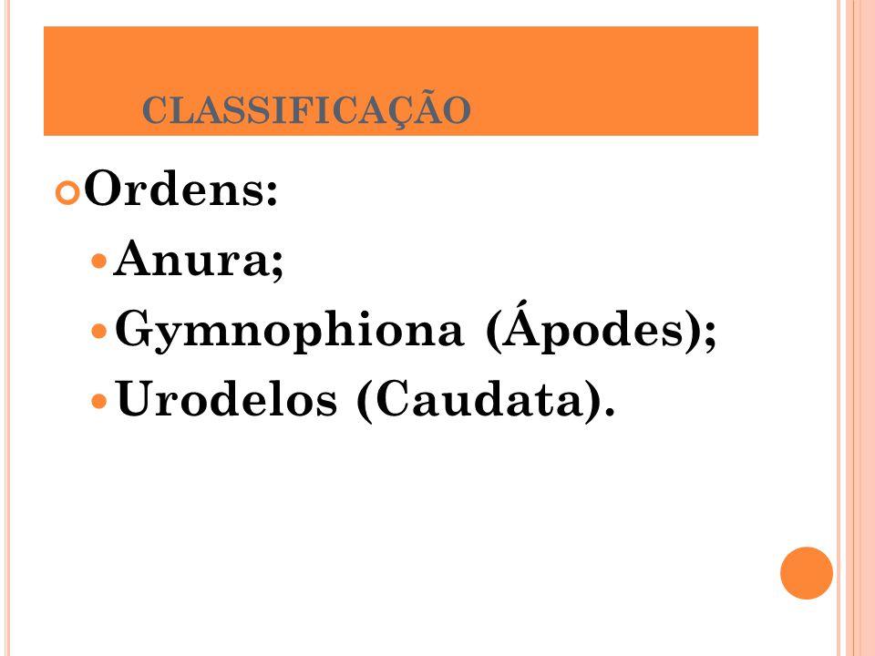 Gymnophiona (Ápodes); Urodelos (Caudata).