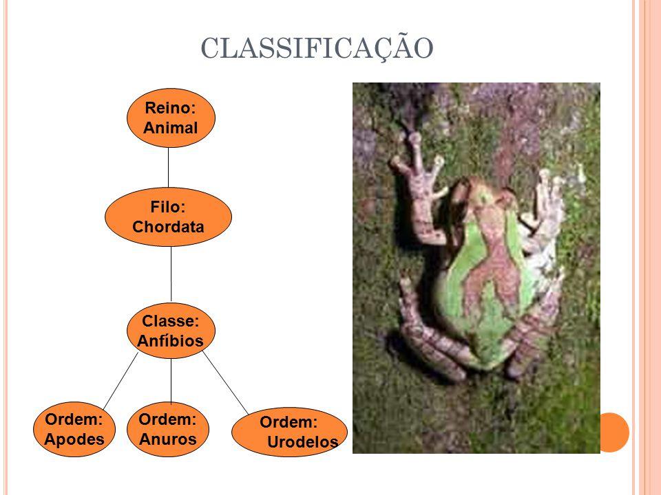 CLASSIFICAÇÃO Reino: Animal Filo: Chordata Classe: Anfíbios Ordem: