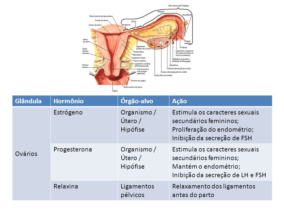 Glândula Hormônio. Órgão-alvo. Ação. Ovários. Estrógeno. Organismo / Útero / Hipófise. Estimula os caracteres sexuais secundários femininos;