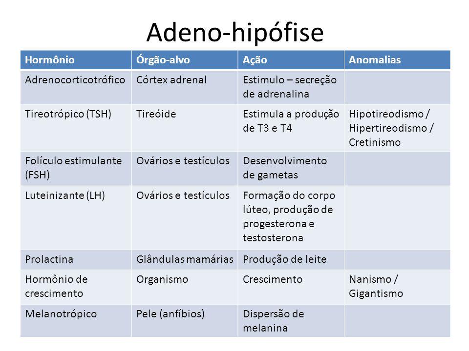 Adeno-hipófise Hormônio Órgão-alvo Ação Anomalias Adrenocorticotrófico