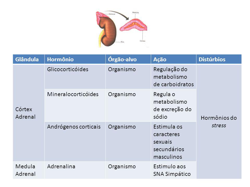 Glândula Hormônio. Órgão-alvo. Ação. Distúrbios. Córtex Adrenal. Glicocorticóides. Organismo.