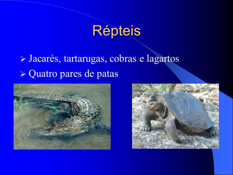 Répteis Jacarés, tartarugas, cobras e lagartos Quatro pares de patas