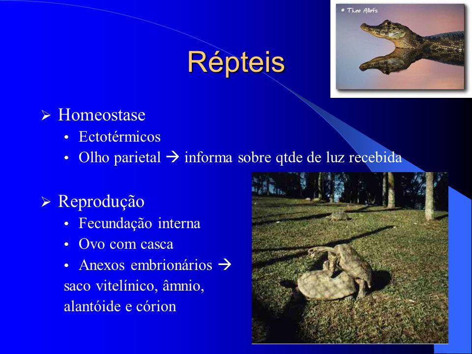 Répteis Homeostase Reprodução Ectotérmicos