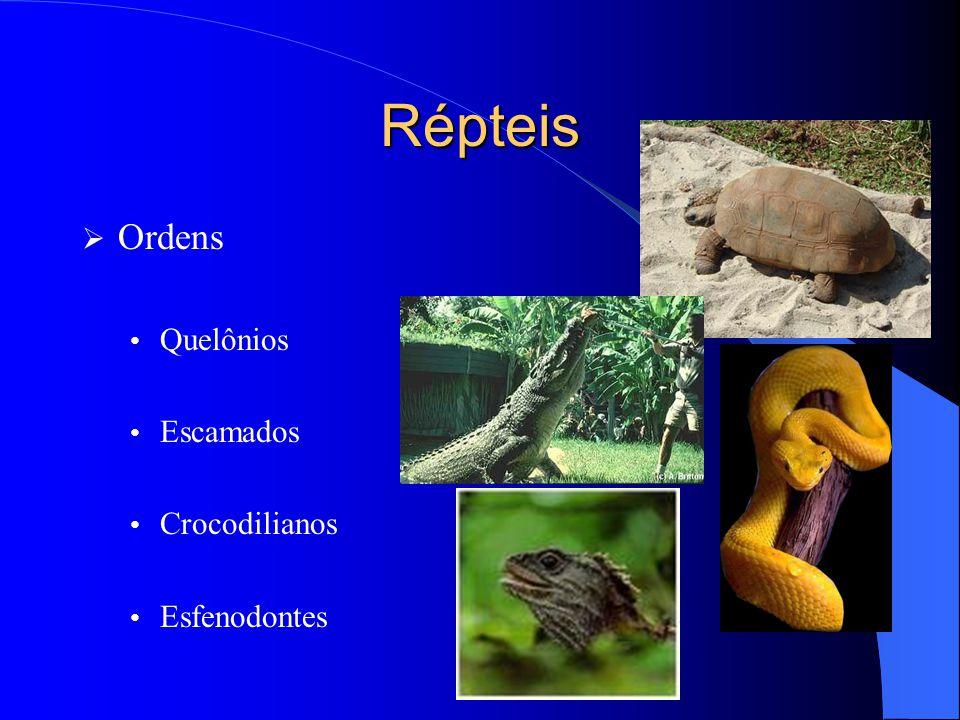 Répteis Ordens Quelônios Escamados Crocodilianos Esfenodontes
