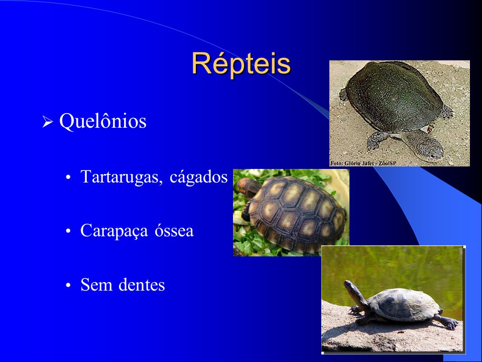 Répteis Quelônios Tartarugas, cágados e jabutis Carapaça óssea