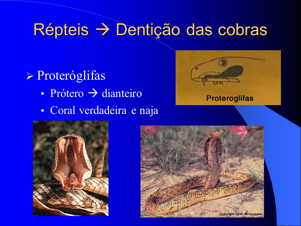Répteis  Dentição das cobras