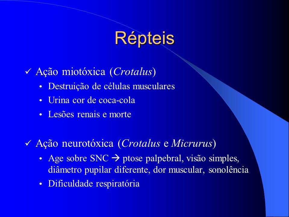 Répteis Ação miotóxica (Crotalus)