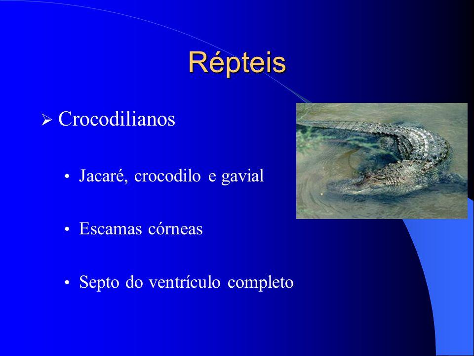 Répteis Crocodilianos Jacaré, crocodilo e gavial Escamas córneas