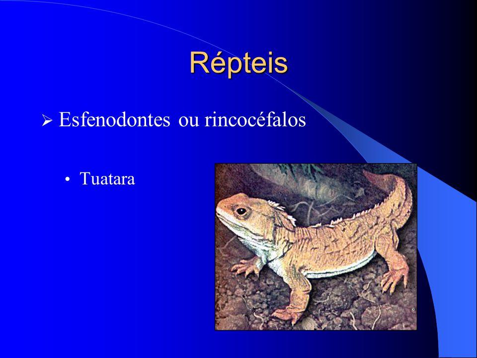 Répteis Esfenodontes ou rincocéfalos Tuatara
