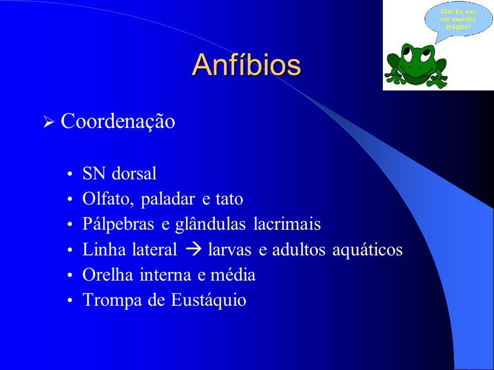 Anfíbios Coordenação SN dorsal Olfato, paladar e tato