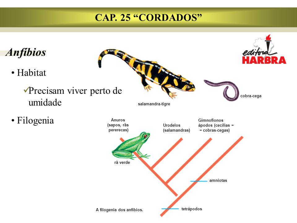 A filogenia dos anfíbios.