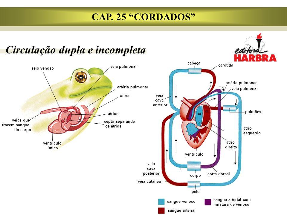 sangue arterial com mistura de venoso