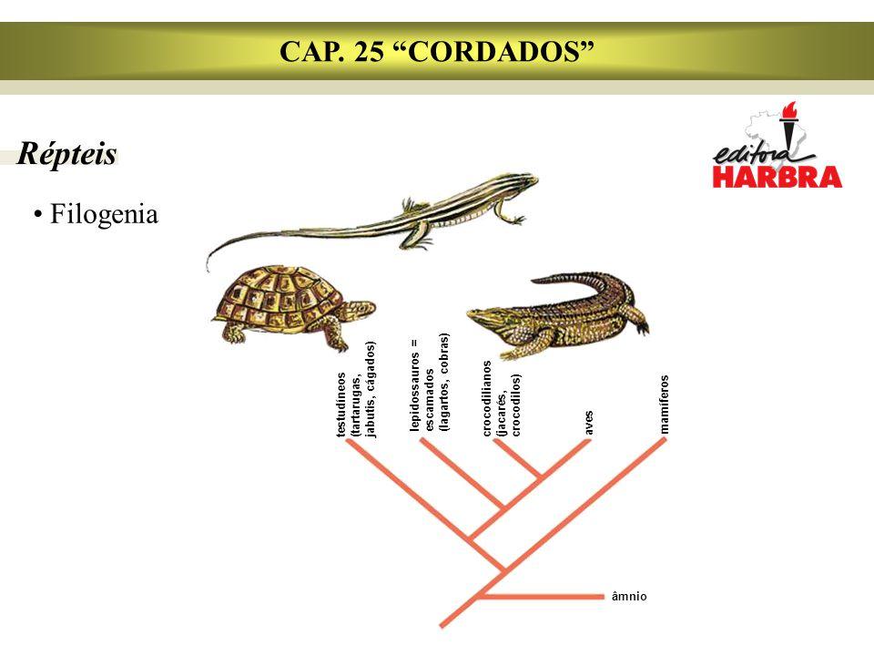 Répteis CAP. 25 CORDADOS Filogenia