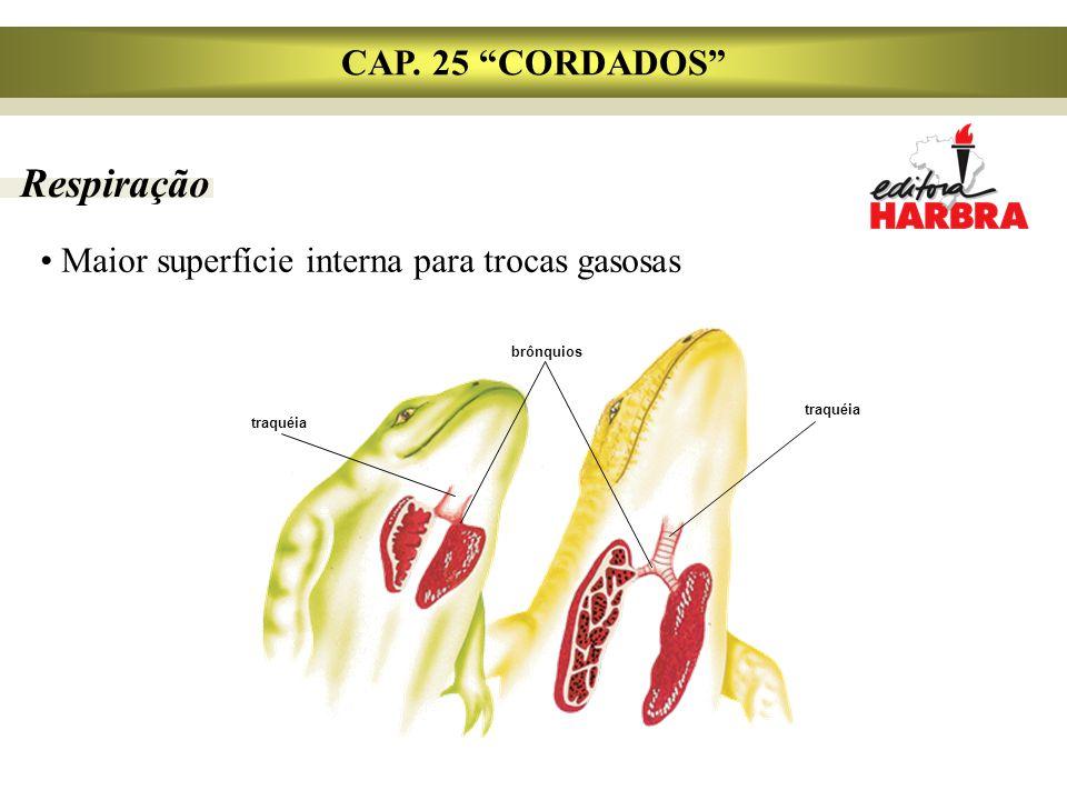 Respiração CAP. 25 CORDADOS