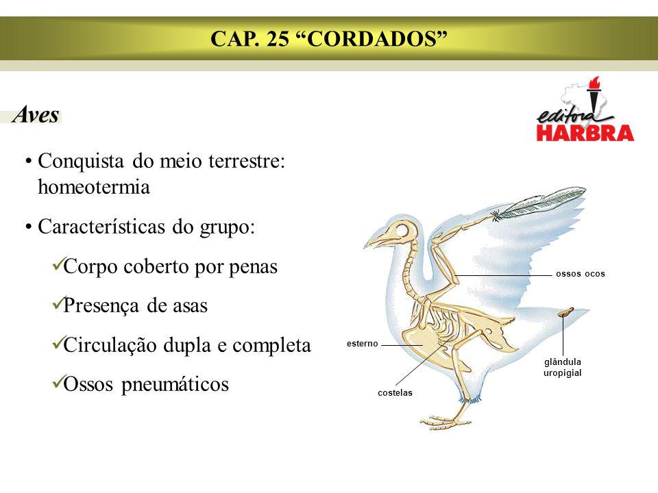 Aves CAP. 25 CORDADOS Conquista do meio terrestre: homeotermia