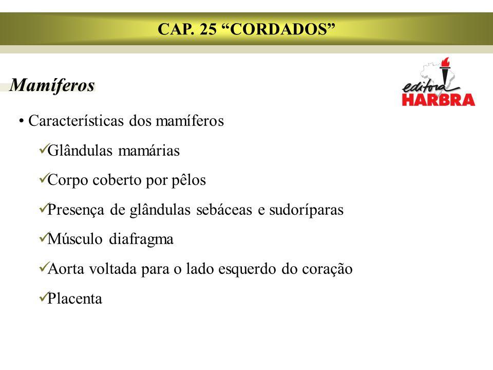 Mamíferos CAP. 25 CORDADOS Características dos mamíferos