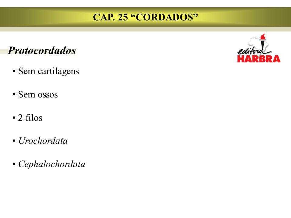 Protocordados CAP. 25 CORDADOS Sem cartilagens Sem ossos 2 filos