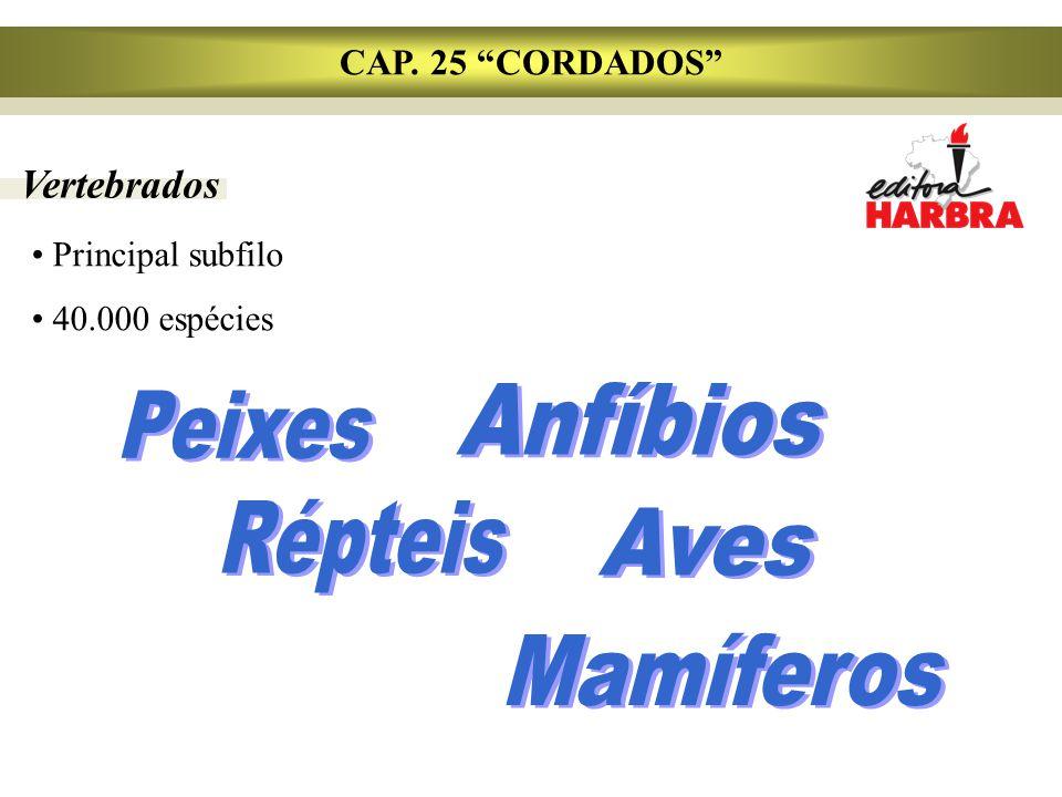 CAP. 25 CORDADOS Vertebrados Principal subfilo 40.000 espécies
