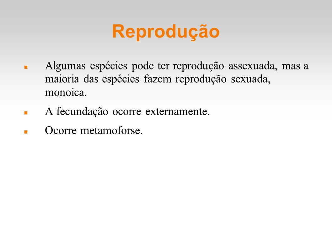 Reprodução Algumas espécies pode ter reprodução assexuada, mas a maioria das espécies fazem reprodução sexuada, monoica.