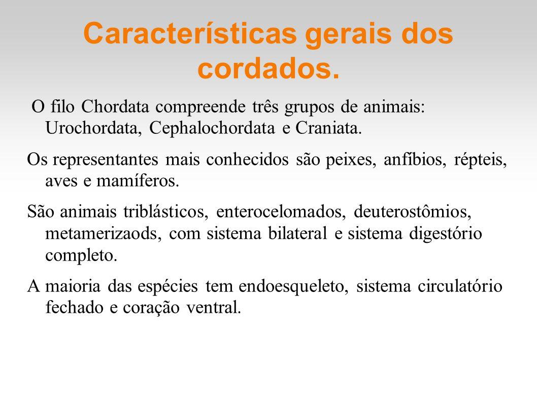 Características gerais dos cordados.