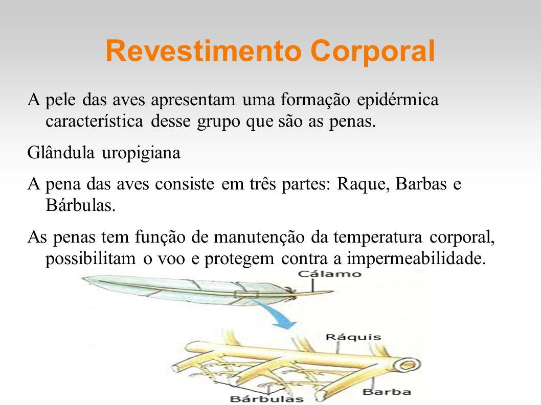 Revestimento Corporal