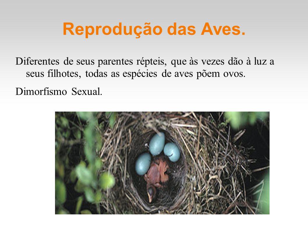 Reprodução das Aves. Diferentes de seus parentes répteis, que às vezes dão à luz a seus filhotes, todas as espécies de aves põem ovos.