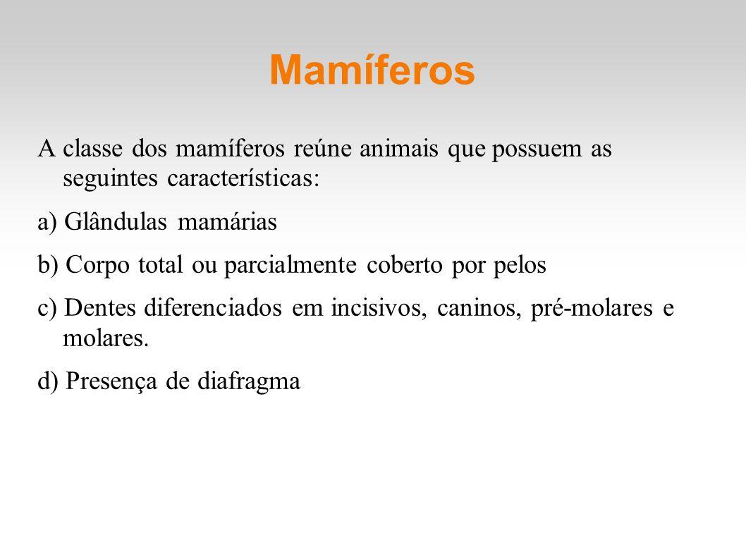Mamíferos A classe dos mamíferos reúne animais que possuem as seguintes características: a) Glândulas mamárias.