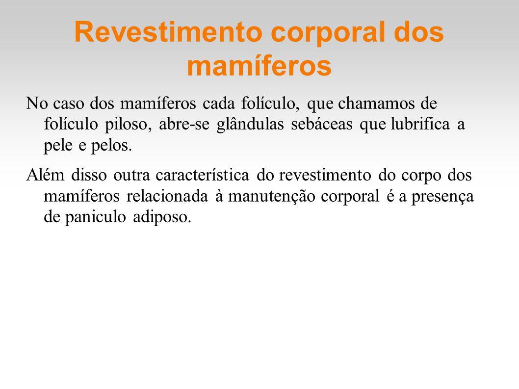 Revestimento corporal dos mamíferos