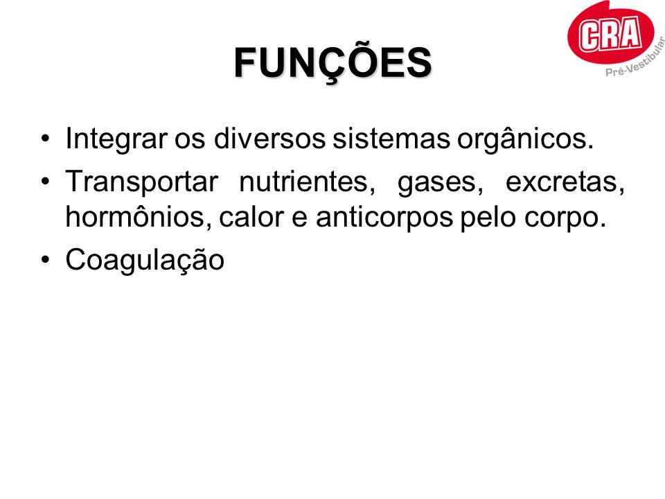 FUNÇÕES Integrar os diversos sistemas orgânicos.