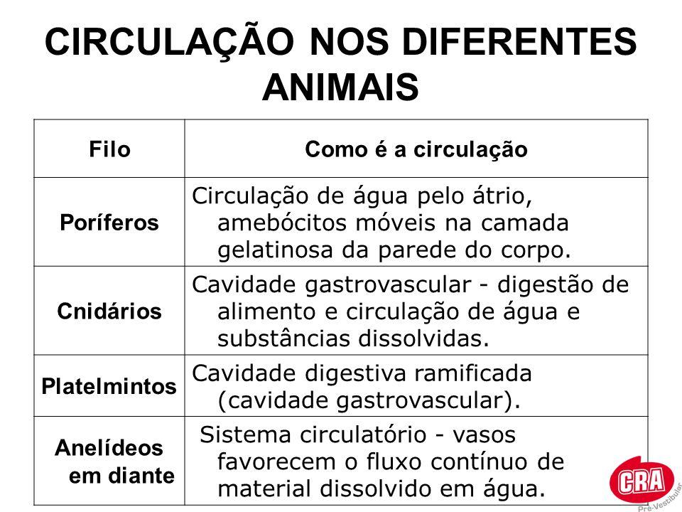 CIRCULAÇÃO NOS DIFERENTES ANIMAIS