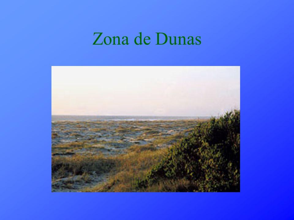 Zona de Dunas