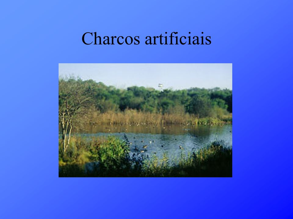 Charcos artificiais