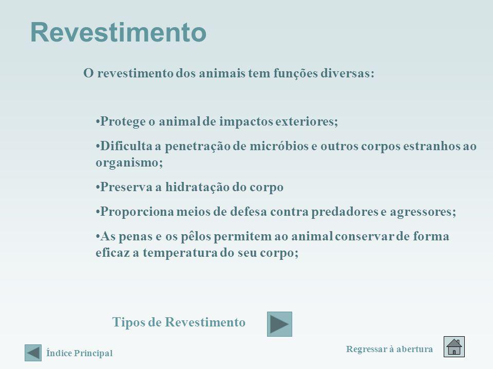 Revestimento O revestimento dos animais tem funções diversas: