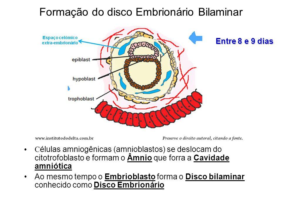 Formação do disco Embrionário Bilaminar