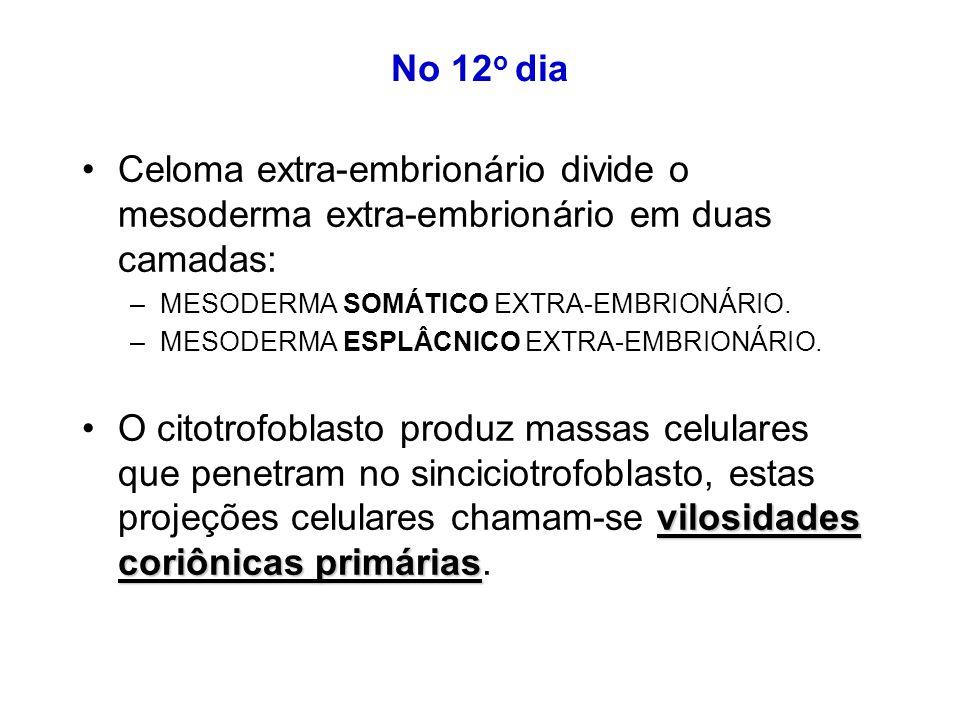 No 12o dia Celoma extra-embrionário divide o mesoderma extra-embrionário em duas camadas: MESODERMA SOMÁTICO EXTRA-EMBRIONÁRIO.