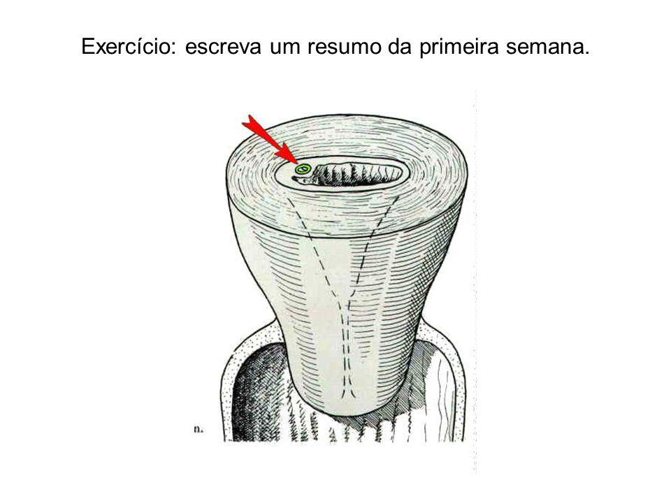 Exercício: escreva um resumo da primeira semana.