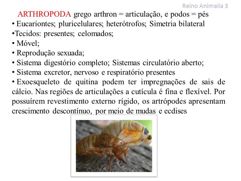 ARTHROPODA grego arthron = articulação, e podos = pés