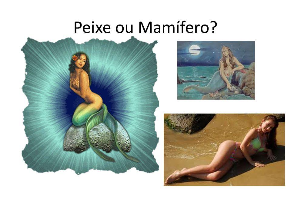 Peixe ou Mamífero