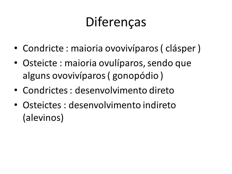 Diferenças Condricte : maioria ovovivíparos ( clásper )