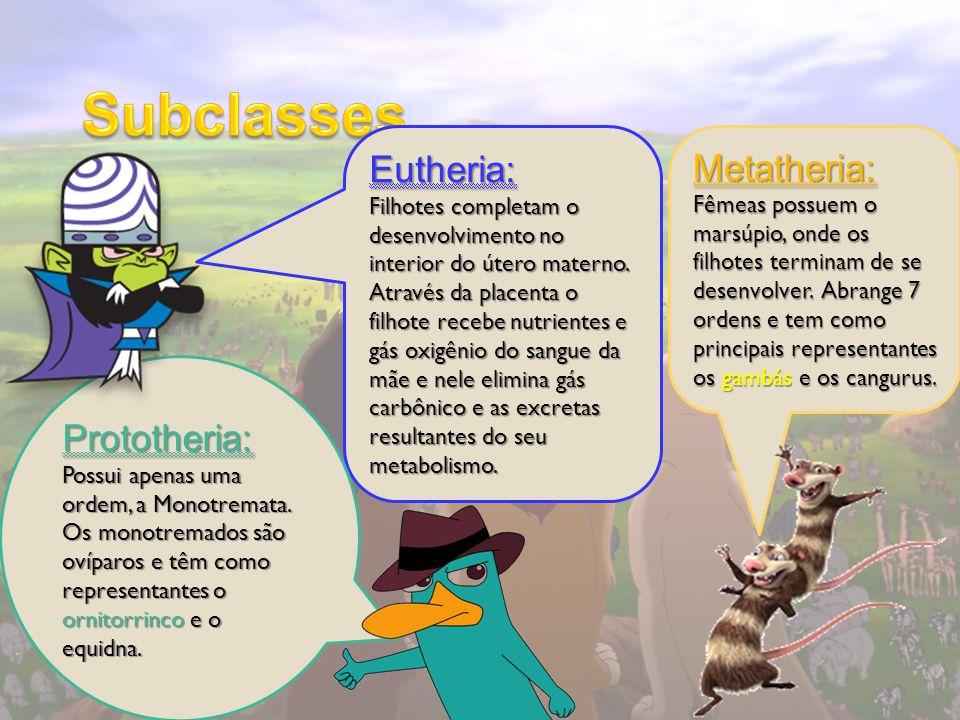 Subclasses Eutheria: Metatheria: Prototheria: