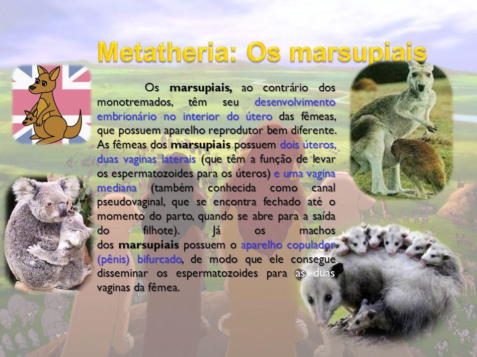 Metatheria: Os marsupiais